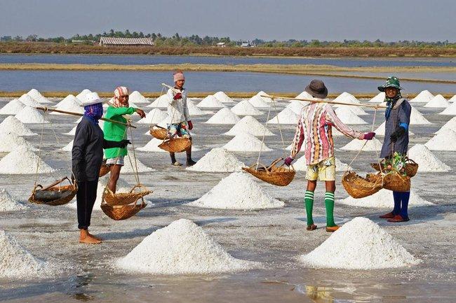 Đề xuất hạn ngạch thuế quan NK đường, muối và trứng gia cầm