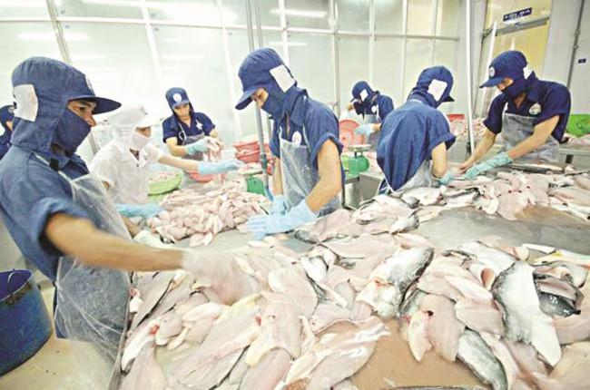 Đòi quyền lợi cho con cá tra