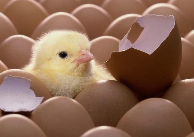 Chúng ta có nên cất trứng vào trong tủ lạnh?