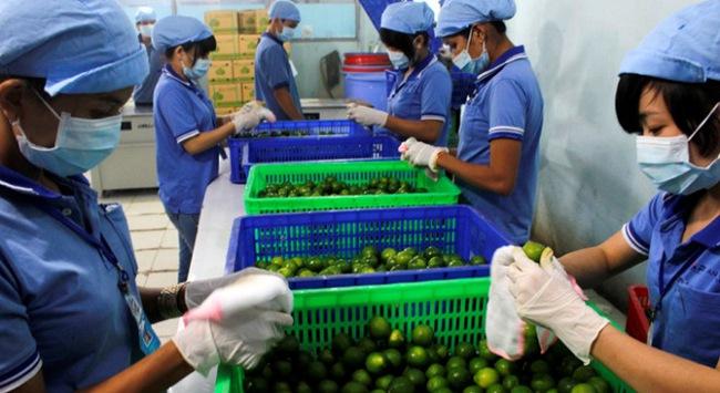 Tăng xuất dừa trái và chanh tươi sang Mỹ, Canada