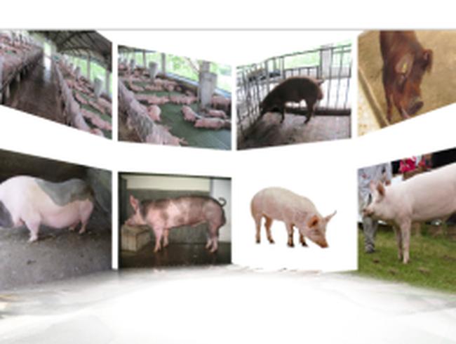 Tổng Công ty Chăn nuôi Việt Nam tiến hành ĐHCĐ lần đầu