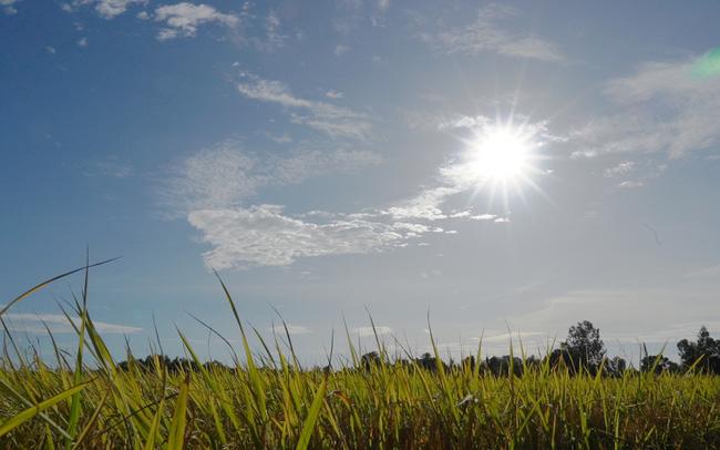 Lối đi nào cho ngành sản xuất lúa gạo Việt Nam?