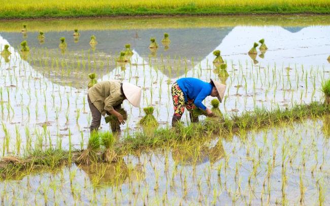 Nông dân Việt Nam được hỗ trợ từ dự án toàn cầu của Bayer