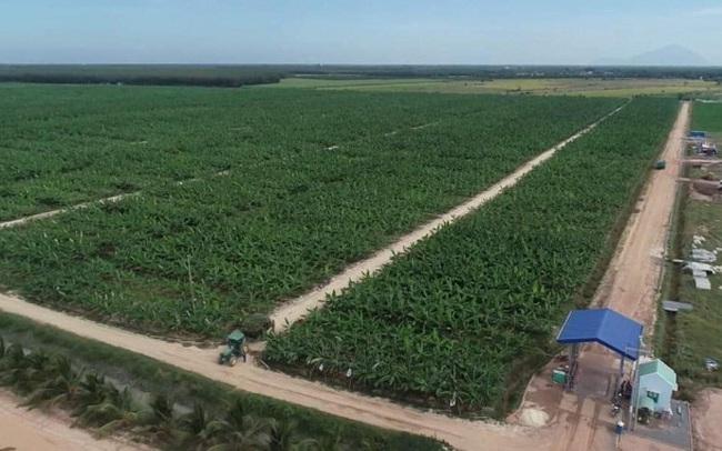 SBT xuất khẩu lô chuối Nam Mỹ đầu tiên sang Hàn Quốc