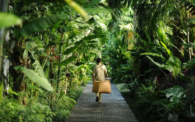 Thiên đường nghỉ dưỡng Bali giữa lòng Ecopark