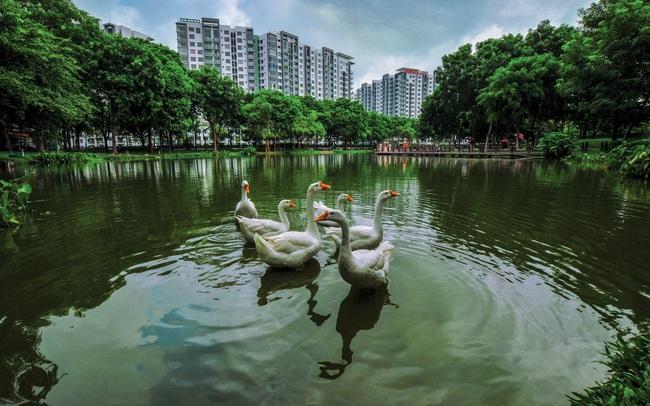Tiến trình đô thị hoá và biện pháp bảo tồn thiên nhiên ngay trong lòng phố