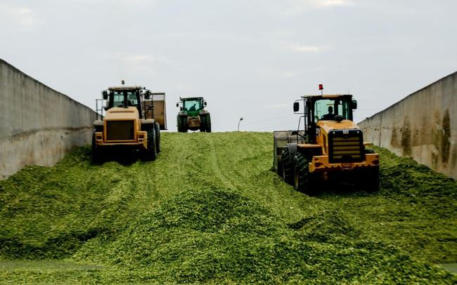 'Hậu trường' quy trình ở cụm trang trại bò sữa lớn nhất thế giới (Kỳ 2)