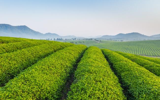 Quy trình làm ra chai trà hoàn toàn tự nhiên chinh phục cộng đồng healthy