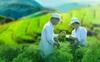 Traphaco định hướng đầu tư vào tân dược, mục tiêu tăng trưởng 20%/năm