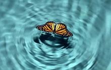 Hiệu ứng cánh bướm, dịch Covid-19 và thời đại 4.0