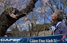 """Mùa hoa anh đào buồn vì vắng khách du lịch tại Nhật Bản: Người kinh doanh méo mặt """"thế này coi như xong"""", cư dân thích thú trước sự bình yên hiếm có"""
