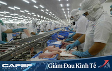 Xuất khẩu cá tra đón nhận tín hiệu tốt từ thị trường Mỹ và Trung Quốc
