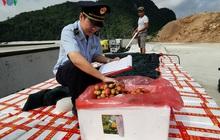 Xuất khẩu quả vải tươi qua cửa khẩu giảm mạnh