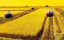 Dân số toàn cầu sẽ đạt 9,7 tỷ năm 2050, làm sao nông nghiệp Việt Nam vừa đáp ứng nhu cầu, vừa không gây ô nhiễm?
