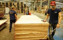 Cảnh báo luồng gỗ bất hợp pháp từ nước ngoài tuồn vào Việt Nam