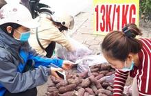 """Khoai lang Nhật """"giải cứu"""" đầy vỉa hè Hà Nội, thương nhân bán giá 13.000 đồng/kg"""