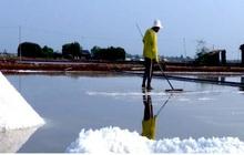 Nắng hạn kéo dài, người làm muối Bạc Liêu trúng mùa
