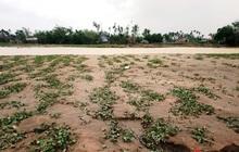 Mưa lũ nhấn chìm vựa rau lớn nhất ở Huế, gây thiệt hại lớn