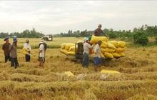 Thị trường nông sản tuần qua: Giá tiêu đồng loạt tăng