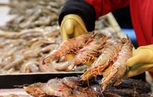 Doanh nghiệp thủy sản chật vật đi qua mùa dịch