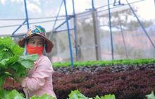 Ngành nghề kinh tế nông thôn mang lại thu nhập tiền tỷ cho người dân