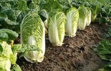 """Bảo vệ sức khỏe vào mùa đông chỉ cần """"ăn nhiều 1 rau, 2 việc đúng giờ, tránh 3 quả và làm 4 điều"""""""