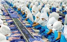 """Thủy sản Vĩnh Hoàn mang 200 tỷ đồng """"nhàn rỗi"""" đầu tư cổ phiếu: Bước đi nhiều rủi ro?"""