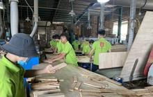 Vụ doanh nghiệp gỗ kêu cứu 3 bộ: Bộ Tài chính lập đoàn kiểm tra