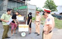 Tiêu hủy gần 600 kg nội tạng động vật bốc mùi hôi thối tại Phú Thọ