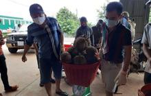 Áp thuế thu mua sầu riêng ở Đắk Lắk, Tổng Cục thuế lên tiếng