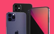 """Thực hư chuyện iPhone 12 Mini sẽ chịu nhiều thiệt thòi chỉ vì đóng vai """"con ghẻ"""" của Apple"""