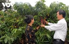 Cà phê Việt Nam hướng mục tiêu xuất khẩu 6 tỷ USD năm 2030