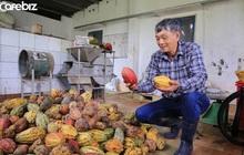Tiến sĩ về làm nông dân: Hồi sinh đồi đá trơ trọi nhờ cỏ dại, trồng cacao không hoá chất tạo dòng socola đắt nhất Việt Nam