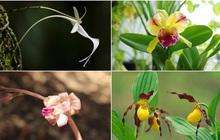 8 loại hoa lan đắt tiền nhất trên thế giới, có cây lên tới hơn 4 tỷ đồng