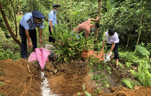 Tiêu hủy hơn 100 tấn lợn nhiễm dịch tả Châu Phi