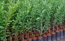 Giống cây trồng Miền Nam (SSC) báo lãi quý 3/2021 giảm 42%, còn hơn 8 tỷ đồng