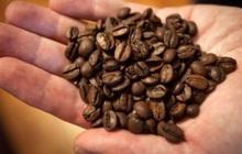 Vì sao giá cà phê sẽ tăng cao trong dài hạn?