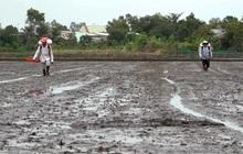 """Đề xuất giảm 50% lượng phân bón vụ đông xuân, nông dân ĐBSCL run rẩy làm """"vụ lúa ăn chắc"""""""