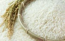 Thu hồi lô gạo ST25 xuất đi Bỉ do dư lượng hoá chất vượt quy định
