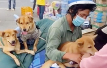 Cuộc sống hiện tại của chủ nhân 15 con chó bị tiêu hủy ở Cà Mau như thế nào?
