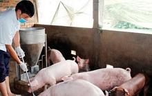 Bộ trưởng Nông nghiệp lý giải vì sao cả ngành chăn nuôi thiệt hại 80.000 tỷ đồng nhưng không được hỗ trợ 30.000 tỷ như Vietnam Airlines?