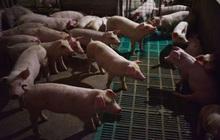 Sự kỳ lạ trên TTCK Trung Quốc: Nhà đầu tư chỉ yêu thích cổ phiếu 'thịt heo', khi cả thế giới lo ngại lạm phát và đổ tiền vào lĩnh vực công nghệ