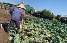 Đắng đót được mùa nông sản