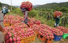 Rau quả Việt Nam xuất khẩu mạnh sang Thái Lan 