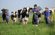 Mộc Châu Milk đặt mục tiêu lãi ròng 319 tỷ năm 2021, cao nhất từ trước đến nay