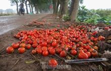 200 tấn rau củ quả 'ế', người dân Hà Nội đổ ngoài đồng
