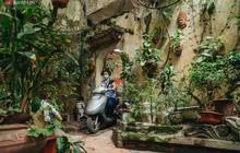Ngôi nhà 80 năm tuổi, rộng gần 300m2 giữa phố cổ Hà Nội: Trả trăm tỷ không bán, bên trong có hầm chứa được 20 người