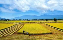 TAR giảm mạnh, Tổng Giám đốc Nông nghiệp Công nghệ cao Trung An vẫn đăng ký bán hết hơn 9 triệu cổ phiếu