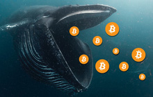 Số lượng 'cá voi bitcoin' vừa sụt giảm xuống mức thấp đáng kể