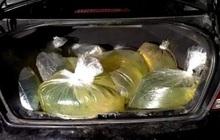 Người Mỹ vác túi nilon, thùng rác đi tích trữ xăng dầu